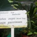 Khibiny. Kirovsk Polar Botanical Garden. Photo: Konstantin Galat