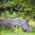 Uganda. Rhino reserve area. Photo: Konstantin Galat