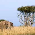 "Uganda. ""Murchison Falls"" national park. Photo: Konstantin Galat"