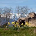 Абхазия. Руины дворца князей в п.Лыхны. Фото – Константин Галат