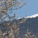 Абхазия. Вид на плато Мамзышха из Пицунды. Фото – Артем Кузнецов