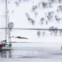 """Северная Норвегия. Заполярный регион Nord Norge. Яхта """"Alter Ego"""" пришвартована ко льду в одном из фьордов на острове Arnoya. Фото - Константин Галат"""