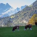 Австрия. Регион Северный Тироль. Фото – Константин Галат