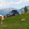 Горный Алтай. Subaru Forester - официальный авто проекта RideThePlanet. Фото - Константин Галат